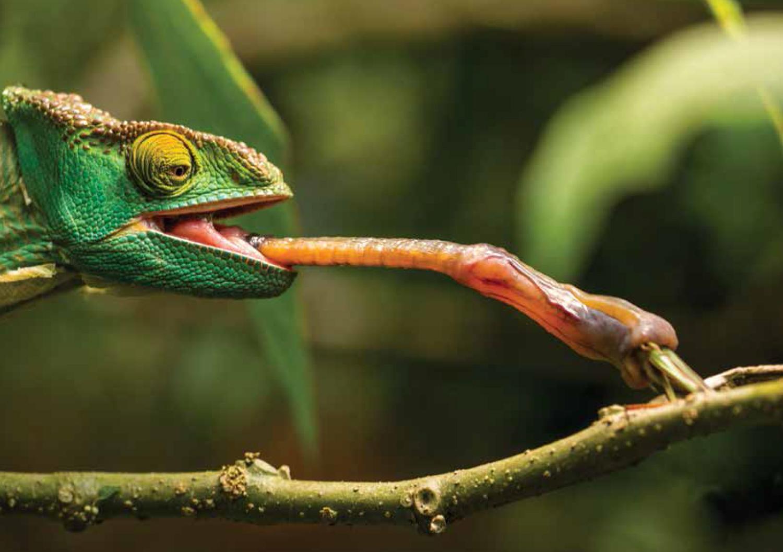 Suficiente Produção de insetos para alimentação de animais exóticos é novo  AQ88